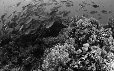 Informe de IPBES alerta sobre el acelerado deterioro ambiental y pérdida de biodiversidad